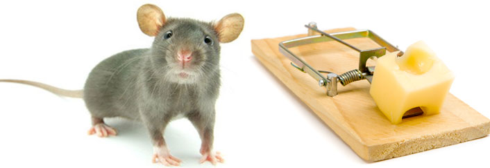 why choose us as rat control company